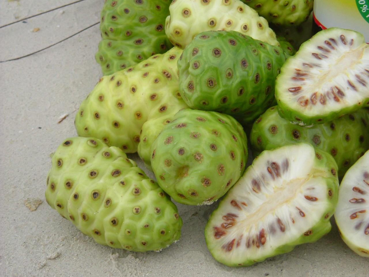 noni fruta