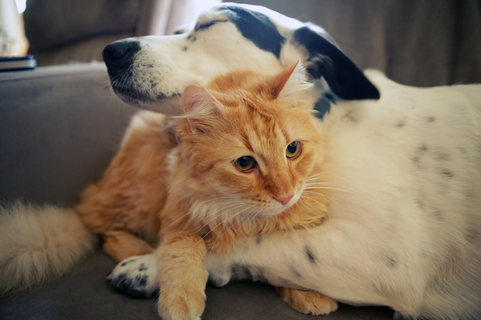 abrazo perro y gato