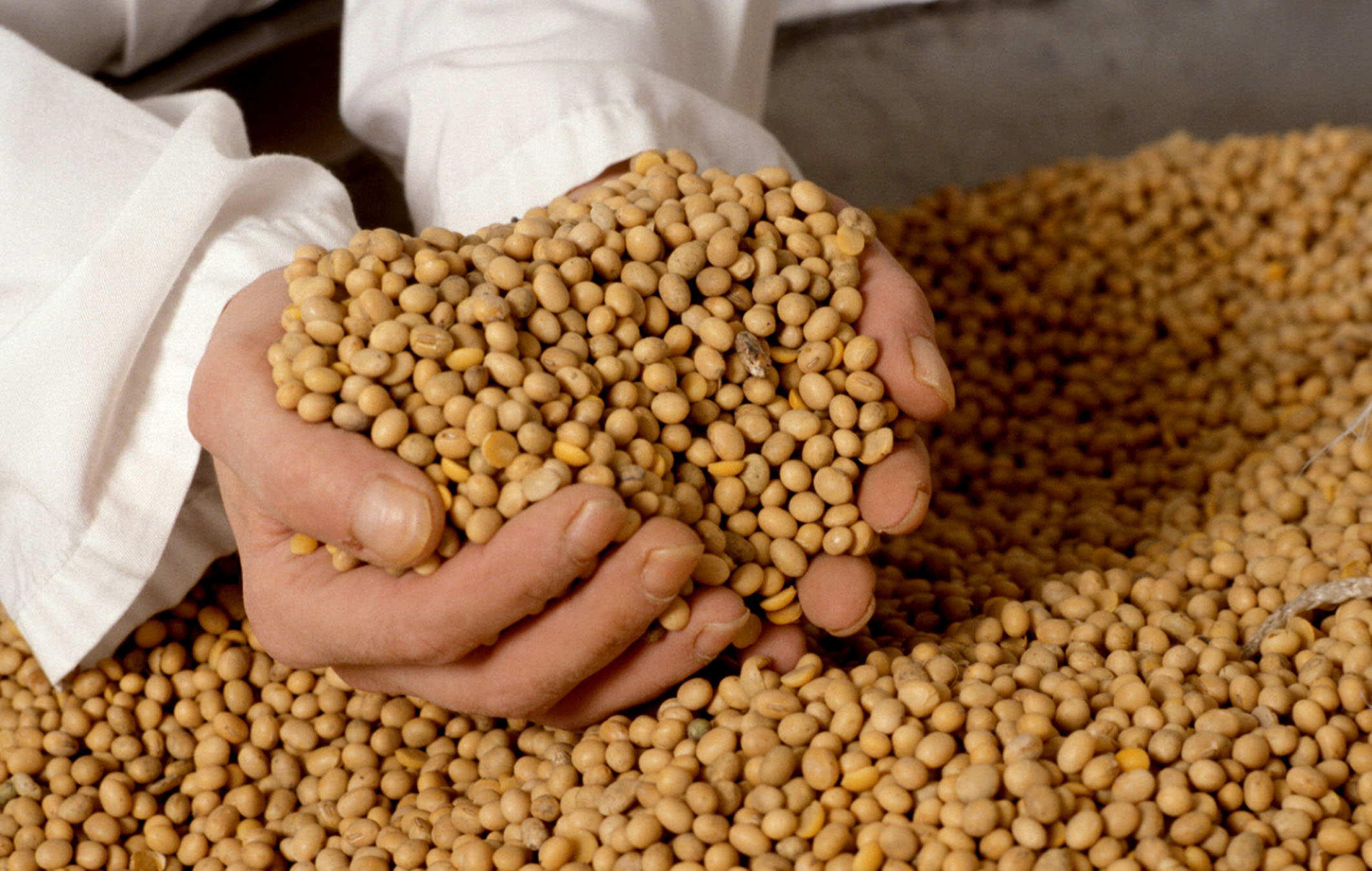lecitina de soja imagen