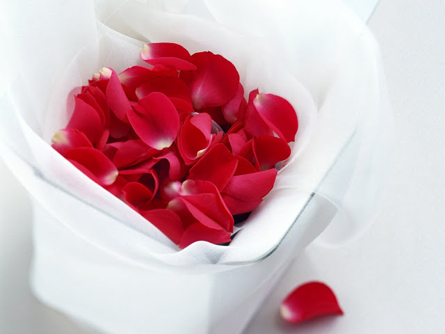 petalos rosa